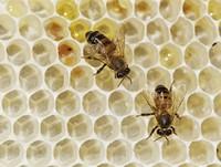 Пчеловодство, как высокодоходный бизнес